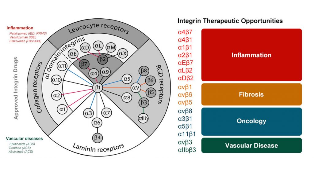 Integrin Therapeutic Opportunities chart