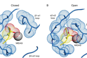 High integrin affinity reached by hybrid domain deletion